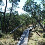 Auf dem Knüppelweg durchs Moor