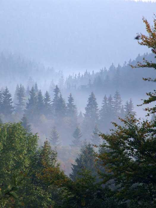 Nebel im Osterzgebirge